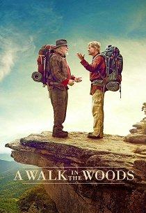 Прогулка по лесам