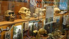 Тайны об истоках человечества, или Как пройти в люди