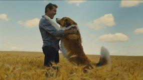 Собачья жизнь-2