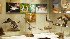 Эволюция поведения животных