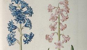 Ботаническая иллюстрация: наука памяти