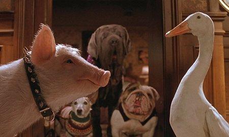 трогательных и увлекательных фильмов про домашних животных
