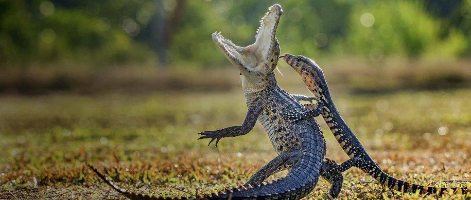 Планы на выходные: «Золотая черепаха» в ЦДХ, динозавры на сцене и «Фантастические твари» в кино