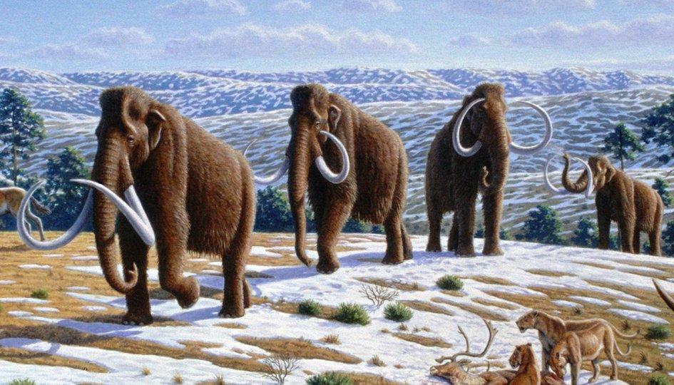Выставки: Мир древних животных Александра Кноблоха