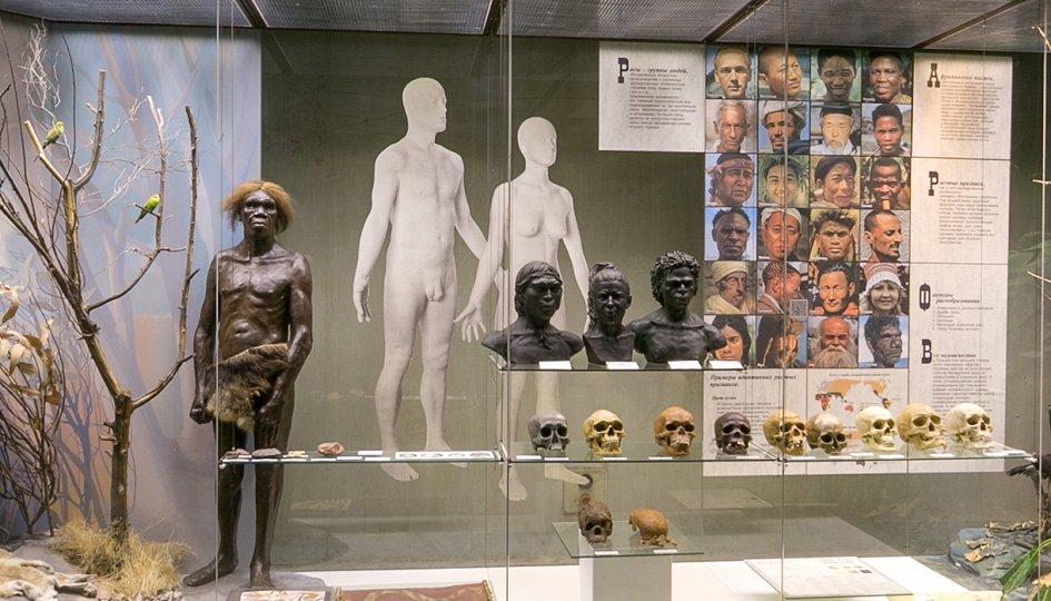 Выставки: Происхождение человека