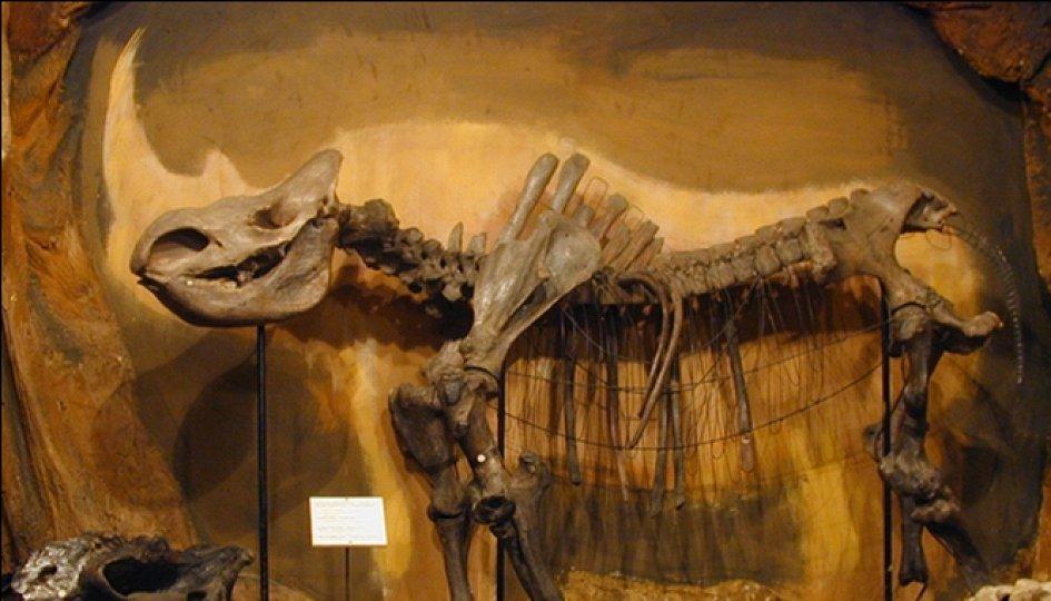 Выставки: Палеонтологическая экспозиция