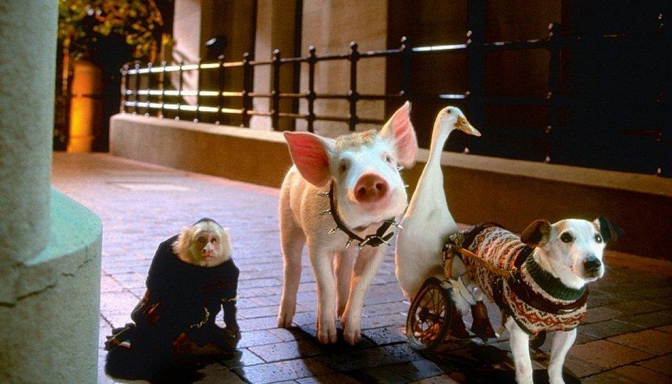 Кино: «Бэйб-2: Поросенок в городе»