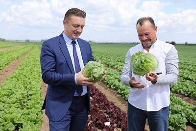 Фермерское хозяйство Кикинадзе вРаменском районе производит 4тыс. тонн овощей ежегодно