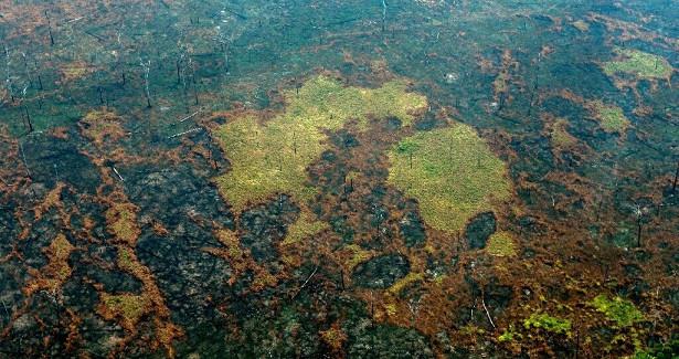 Вырубка лесов уничтожила 8% территории Амазонии за18лет