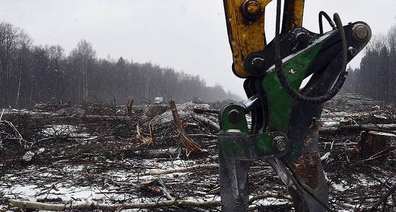 Мосгордума отказалась запрещать вырубки деревьев под строительство