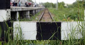 РЖД нанесла ущерб природе Подмосковья на 27 млрд рублей