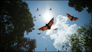 ВВОЗзаявили овозможности пандемии из-завируса Nipah