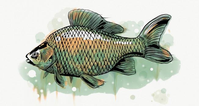 15 русских рыб