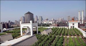 Число стартапов, выращивающих овощи на крышах зданий, растет