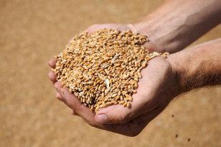РФиИран предварительно согласовали поставки российской пшеницы