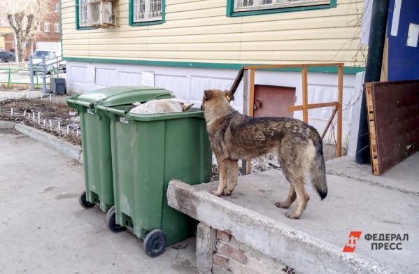 Уральцы страдают отнашествия собак смусорного полигона. «Боимся засвое здоровье ижизни детей»