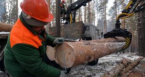 Зеленые критикуют новые правила заготовки древесины