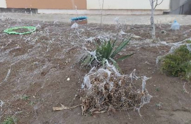 Жители Анапы пожаловались намассовое нашествие пауков