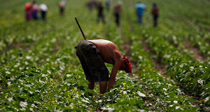 Украина продаст землю за транш